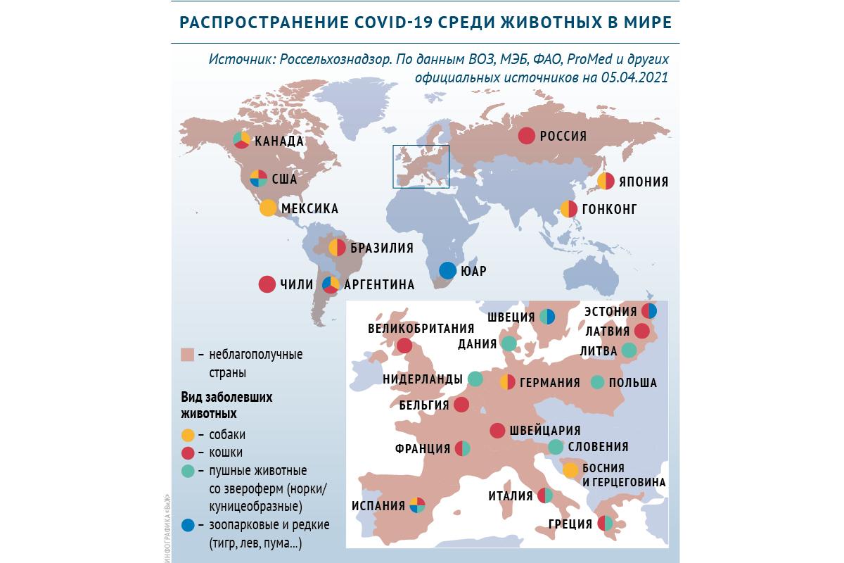 В России зарегистрировали первую в мире вакцину от COVID-19 для животных :: Общество :: РБК