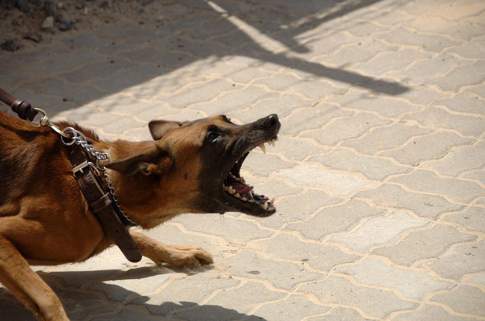 Эксперты рассказали о связи породы собаки и ее агрессии