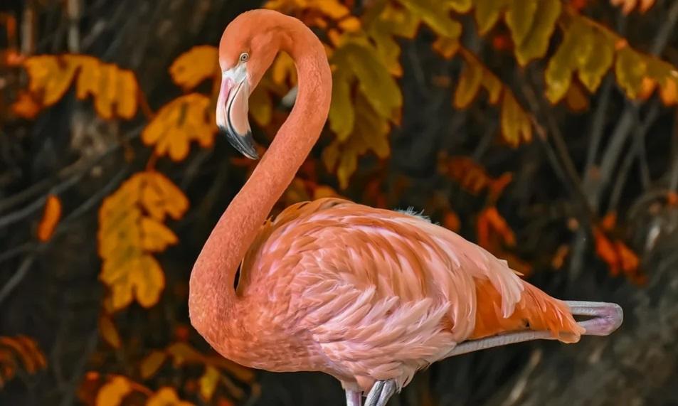 Связан ли «якутский» фламинго с глобальным потеплением
