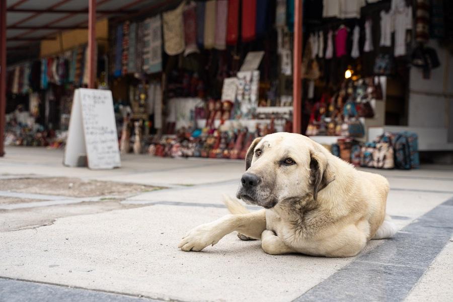 В России хотят промаркировать всех домашних животных