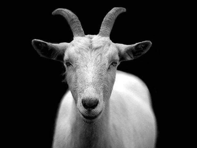 Россия намерена увеличить экспорт баранины и козлятины