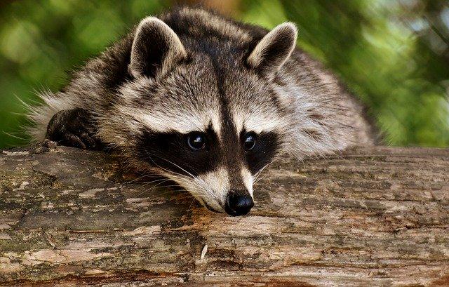 Контактные зоопарки запретят с нового года