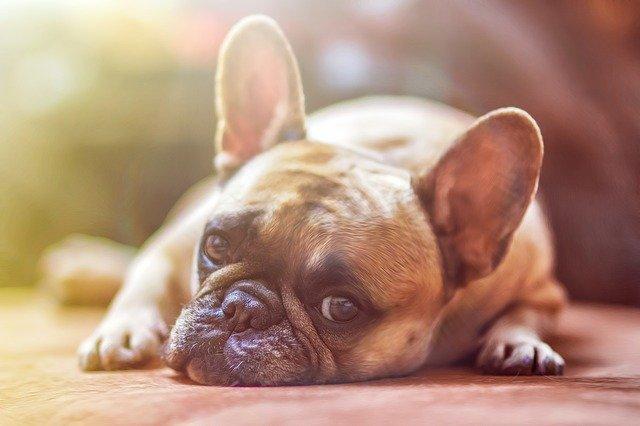Закон о чипировании животных могут принять до конца 2020 года