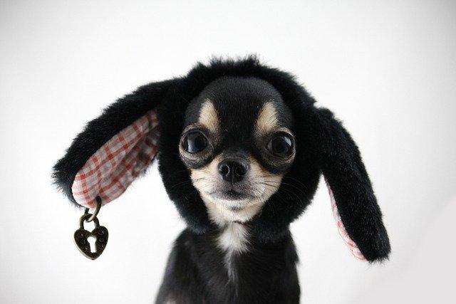 Ветеринары рассказали об опасности модных пород собак и кошек