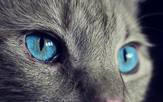 Госдума рассмотрит законопроект о досудебной блокировке видео жестокого обращения с животными