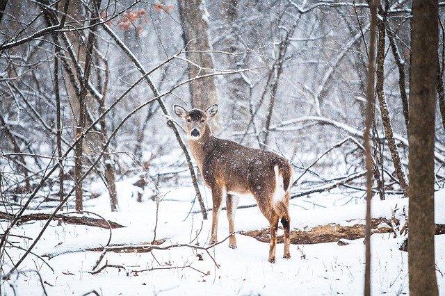 Госдума во втором чтении приняла закон о вольерной охоте