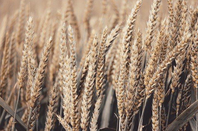 Эксперты предложили новые пути роста российского агроэкспорта