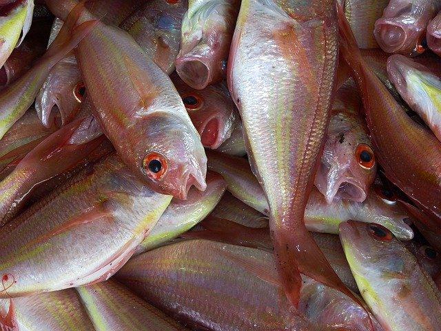 Проверки рыбодобытчиков будут внезапными