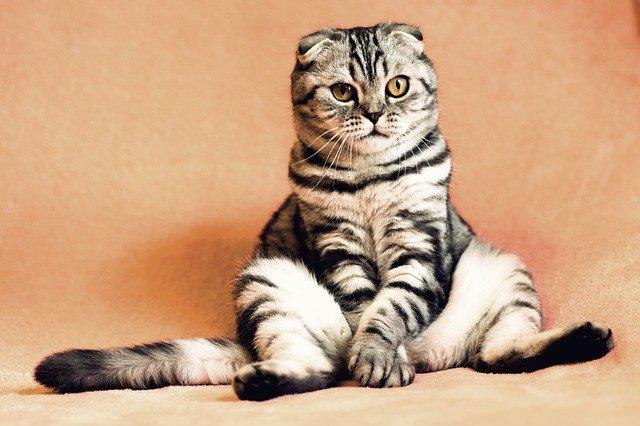 В России продлили акцию по льготной стерилизации кошек