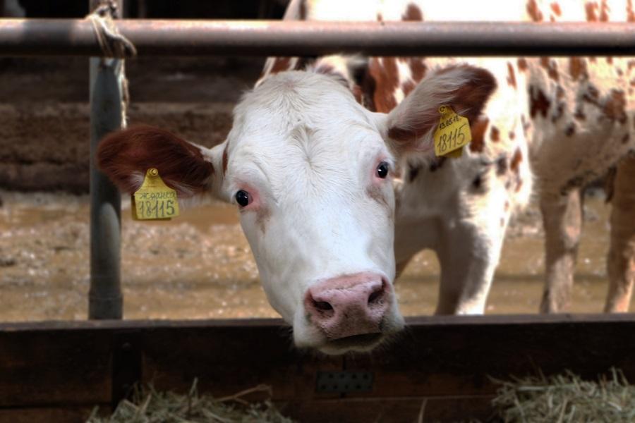 Как на ветеринарной отрасли отразится нерабочая неделя