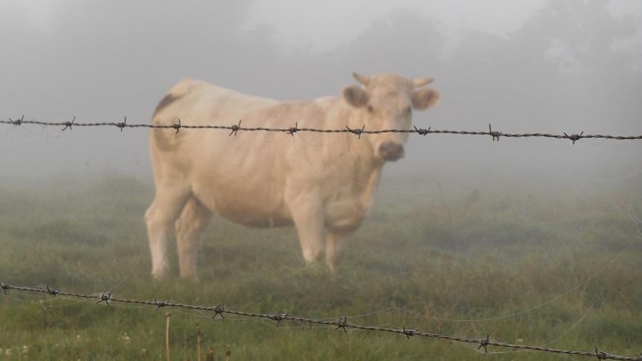 Казахстан ограничивает экспорт живого скота