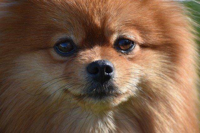 В Гонконге умерла собака с положительным тестом на коронавирус