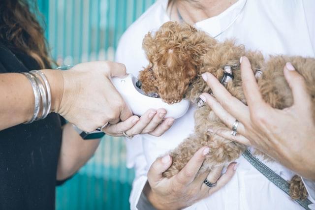 Ученые тестируют экспериментальный препарат для лечения лимфомы у собак