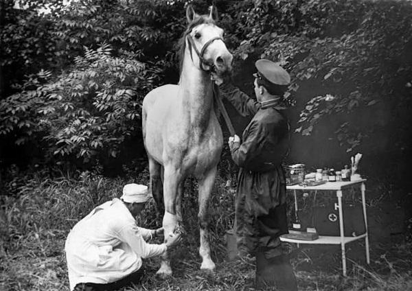 Военно-ветеринарная служба Красной армии за годы войны вернула в строй два миллиона лошадей