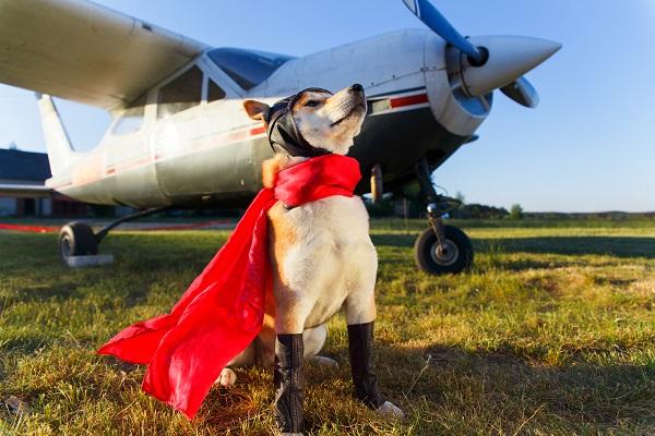 «Аэрофлот» с 15 сентября изменил правила перевозки животных