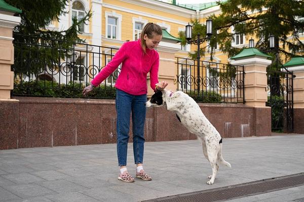 Как регистрируют домашних животных в Москве