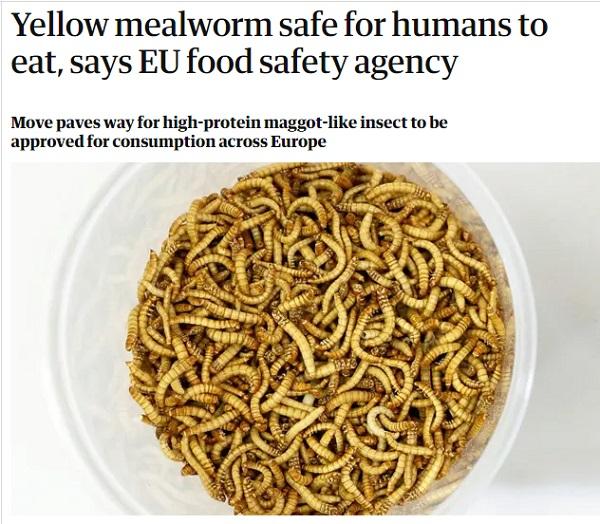 Мучных червей признали безопасной едой в Европе