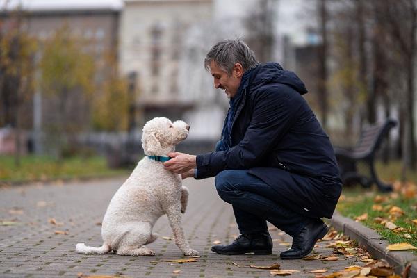 Будимир Плавшич: «Собака – это все, о чем я прошу», – сказала моя дочь