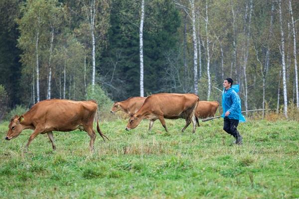 Животноводов Тувы попросили красить скот светящейся в темноте краской