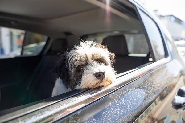 Как перевозить животных в такси