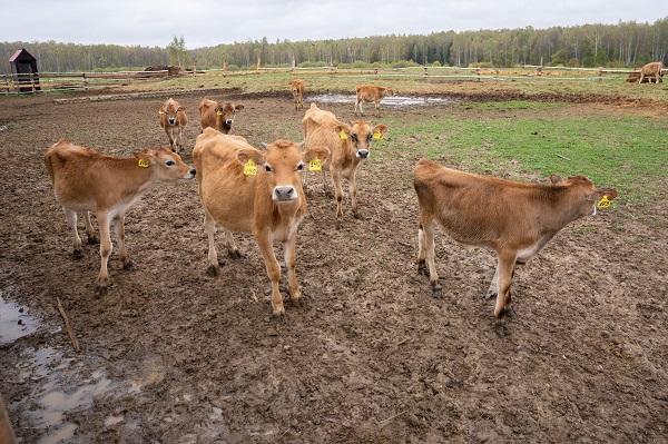 Эксперт рассказал о привлекательности инвестиций в мясное скотоводство