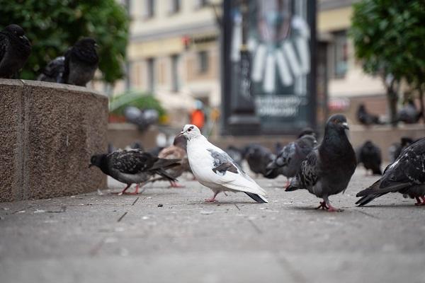 В Великобритании создают платформу для прогнозирования риска гриппа птиц