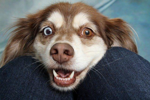 Чем опасно не чистить зубы собаке