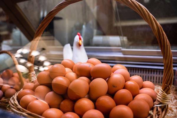 Россельхознадзор отмечает перераспределение объемов ввоза импортного инкубационного яйца
