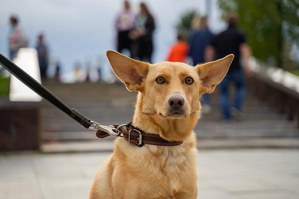 В России проходит онлайн-выставка собак