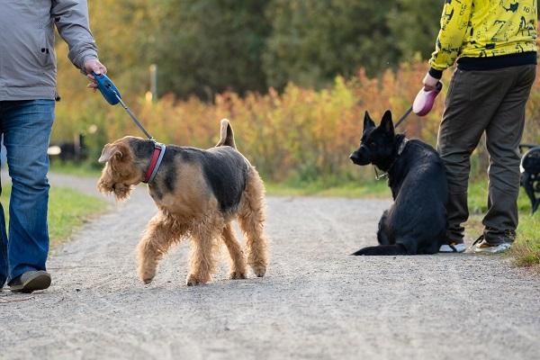 Мособлдума ввела штрафы за выгул собак без намордника