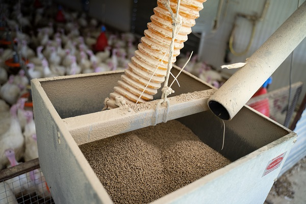 Ценовое ралли: что происходит со стоимостью кормов, ветпрепаратов и племенной продукции