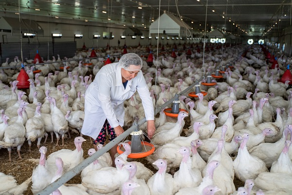 Минсельхоз утвердил новые ветправила по высокопатогенному гриппу птиц