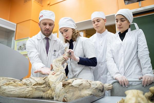 Президент учредил почетное звание «Заслуженный ветеринарный врач Российской Федерации»
