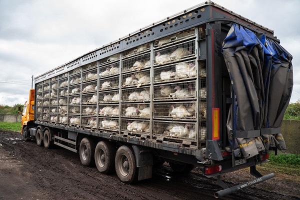Национальный союз птицеводов сообщил о снижении объемов производства