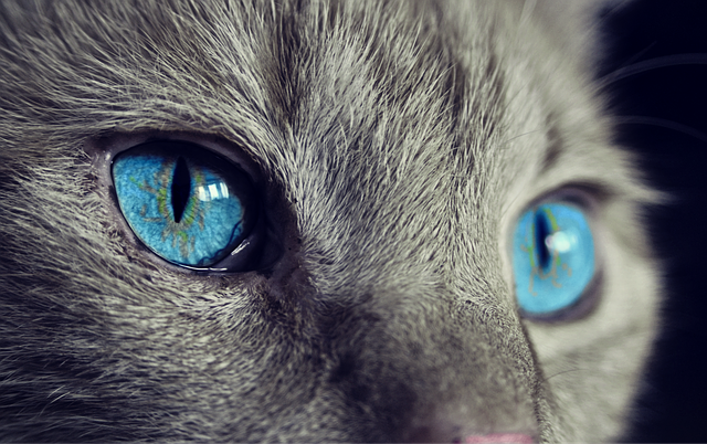 В Великобритании животных хотят законодательно признать разумными существами
