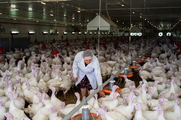 Производство мяса индейки в РФ выросло на 6,3%