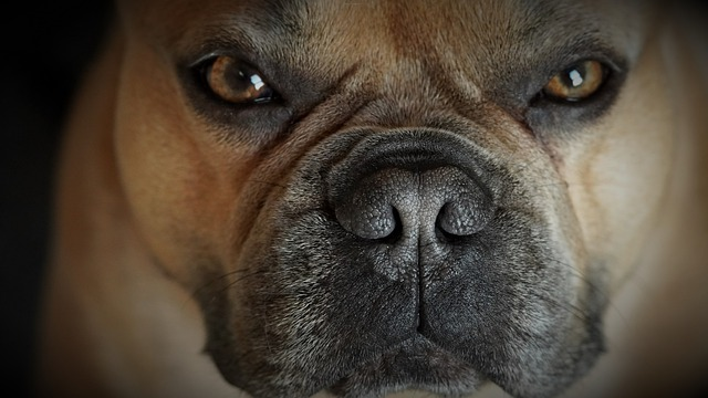 Страховщики оценили перспективы введения ОСАГО для животных
