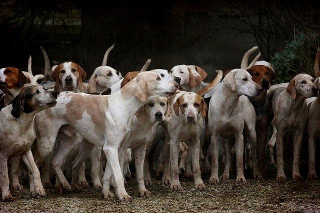 Кабмин поддержал проект о предельном количестве домашних животных