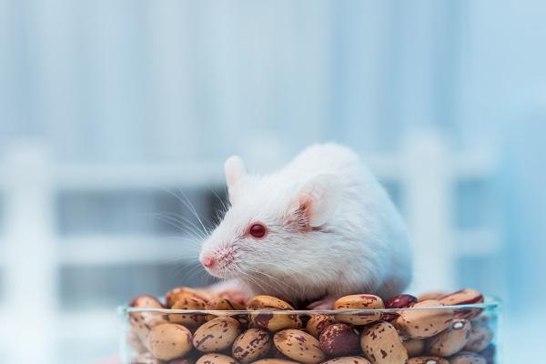 Европарламент намерен запретить использование животных в научных экспериментах