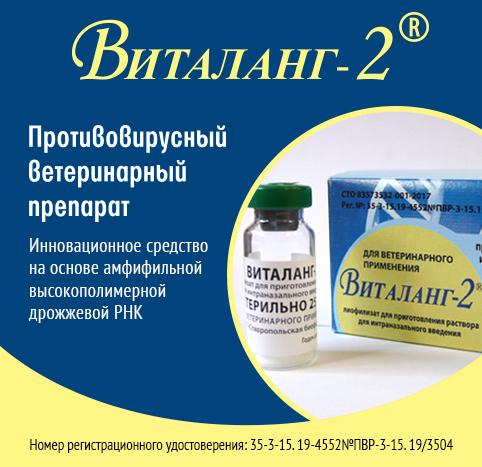 Разработка учёных Академгородка Новосибирска – противовирусный препарат «Виталанг-2»
