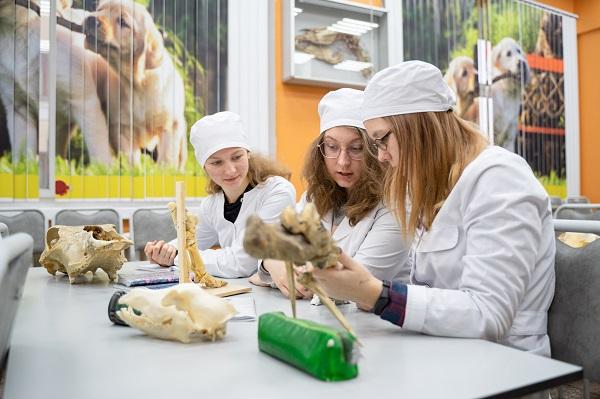 В России определили вузы для открытия ординатуры по ветеринарии