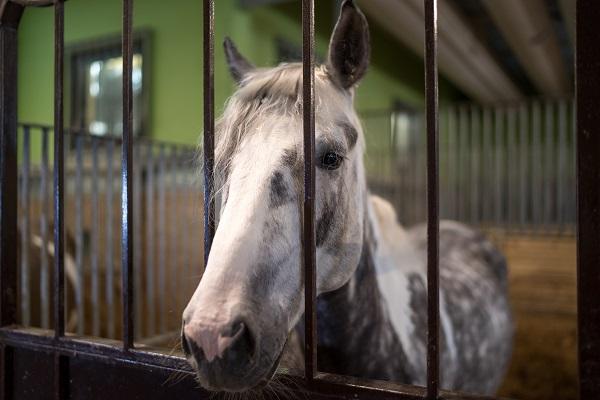 Новые ветправила по африканской чуме лошадей вступят в силу в марте