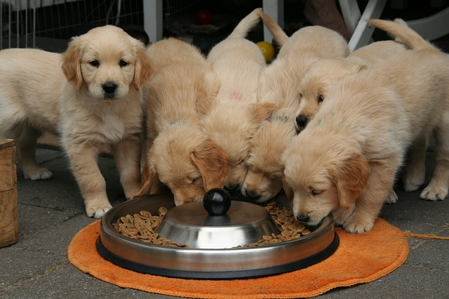 Ученые выяснили, чем опасны щенки из зоомагазинов
