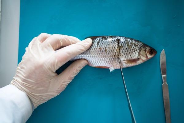 Рыбу проверят на токсины, пестициды и антибиотики