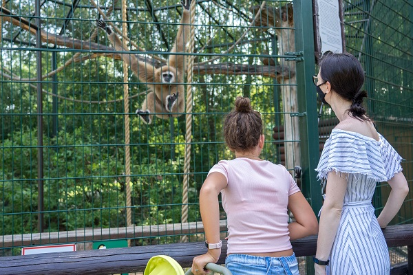 Минэкономразвития предлагает выдавать лицензии циркам и зоопаркам через «Госуслуги»