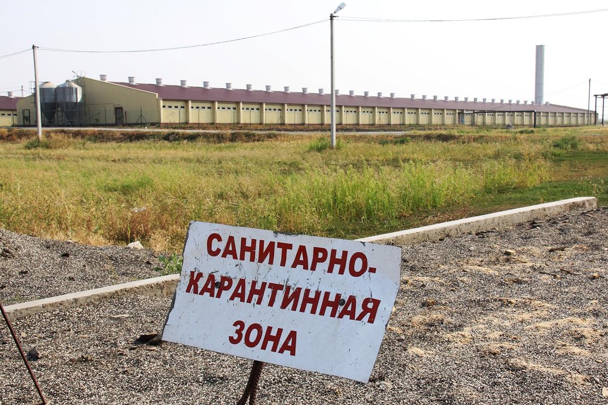 Россельхознадзор сообщил о нарушении ветзаконодательства на птицефабрике в Тюменской области