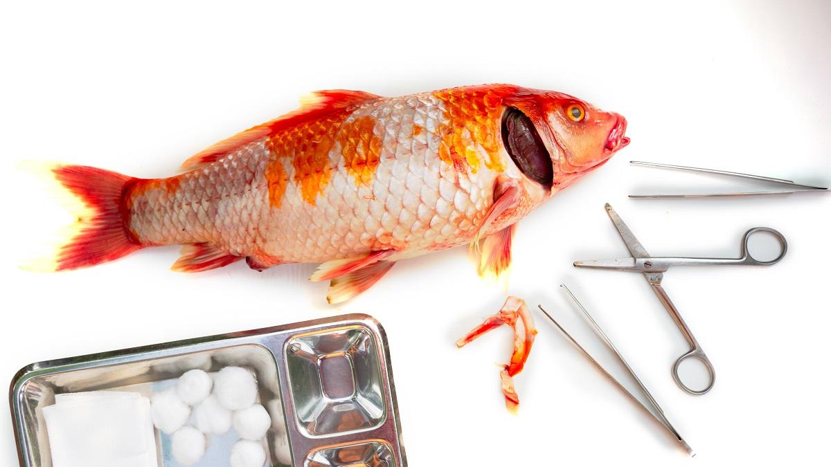 Норвегия занимает первое место в Европе по экспериментам на рыбе
