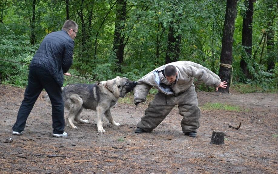 Госдума предлагает штрафовать до 400 тыс. рублей за организацию собачьих боев