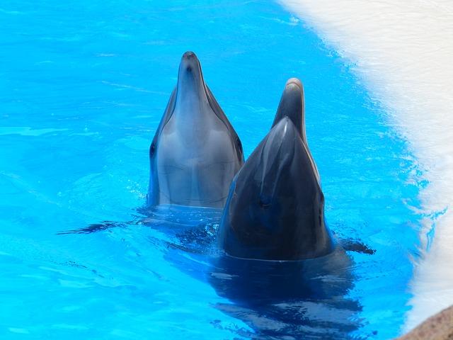Кабмин одобрил законопроект о запрете на вылов китов и дельфинов