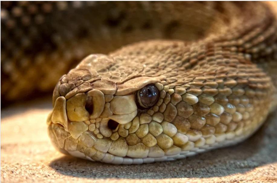 Норвежские эксперты винят змей во вспышке сальмонеллеза в стране